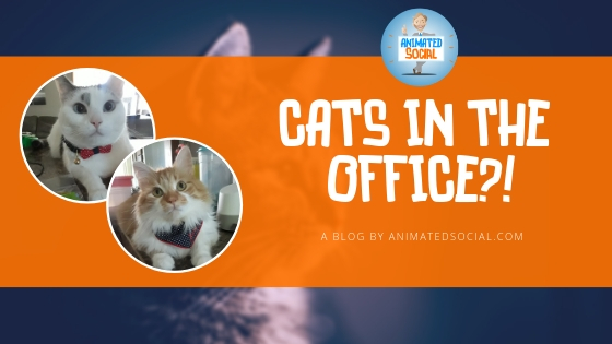 2 cats in an AnimatedSocial branded blog graphic